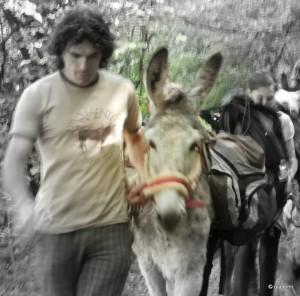 walking with donkey